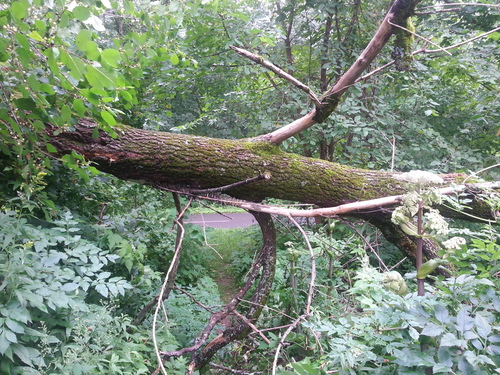 DOWNED TREE HERALDS THE ENDING OF OLD PATHWAYS WE EITHER ACCEPT IT AS A DEAD END THUS CHANGING DIRECTIONS, OR WE DEVOTE OURSELVES TO FINDING A WAY THROUGH A PORTHOLE. TO BE LIKE WATER & FLOW DOWN THE PATH OF LEAST RESISTANCE, OR TO PUSH THROUGH, THE CHOICE IS YOURS. JUST KNOW IF YOU DO CHOOSE CROSS THE THRESHOLD YOU WILL BE SQUEEZED INTO LEAVING THE OLD BEHIND