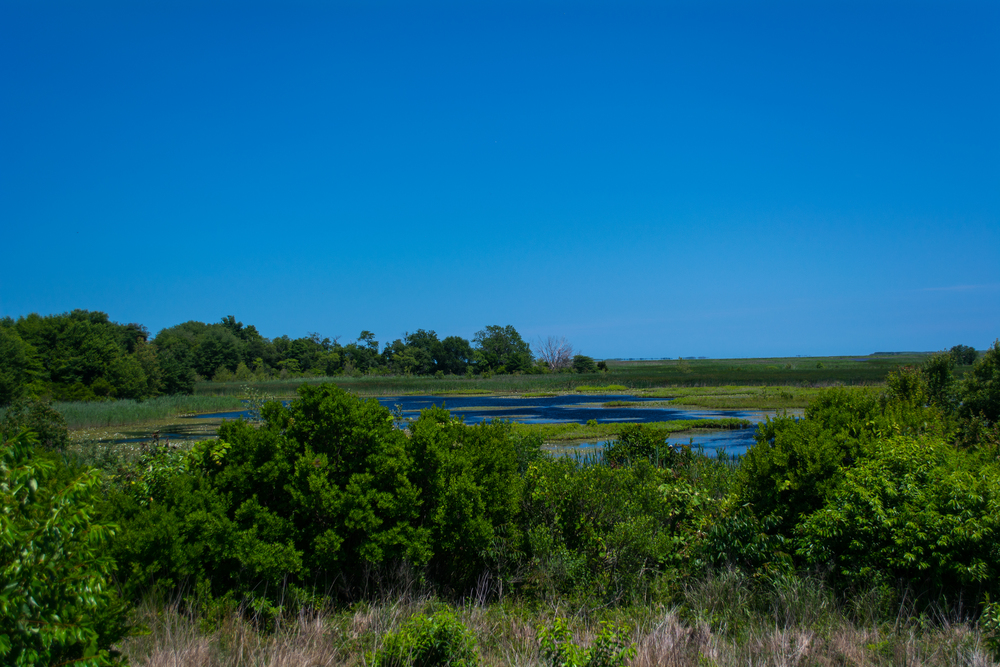 EBF National Wildlife Refuge-0315.jpg