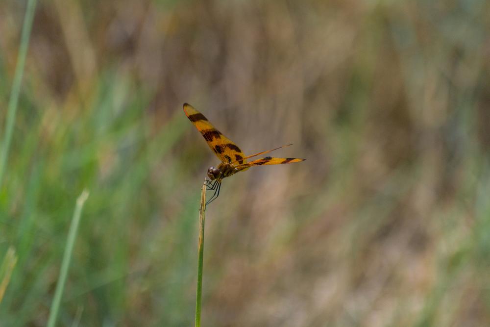EBF National Wildlife Refuge-0027.jpg