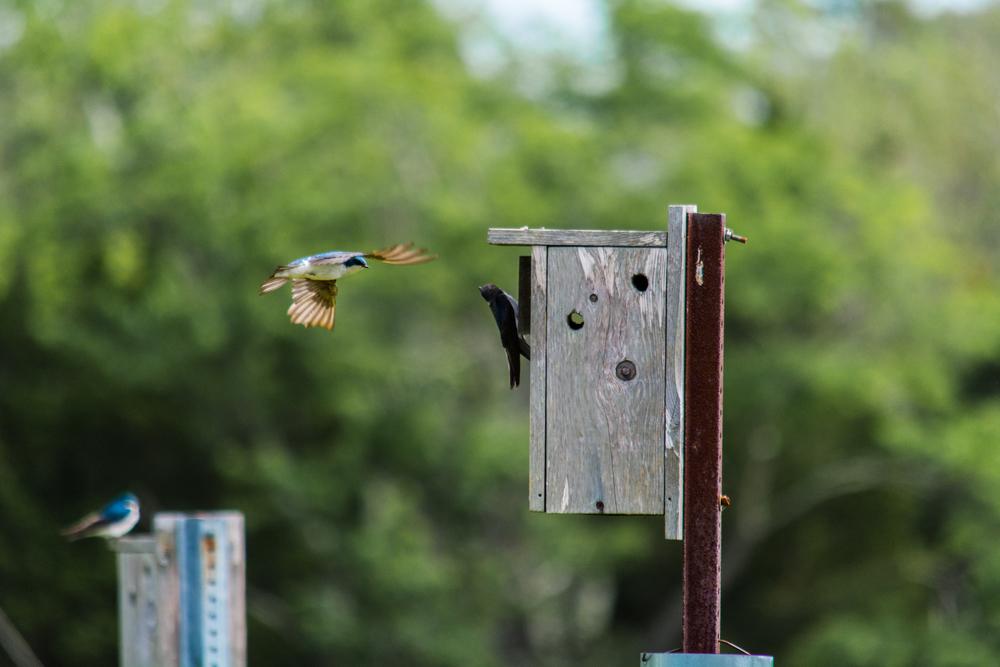 EBF National Wildlife Refuge-0016.jpg