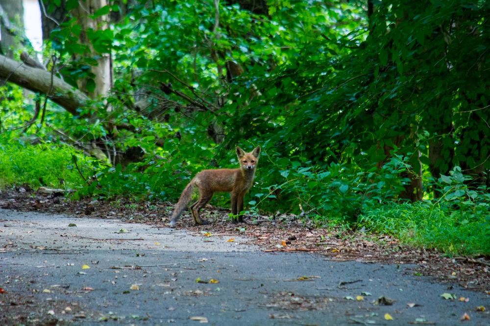 Rancocas State Park-0052.jpg
