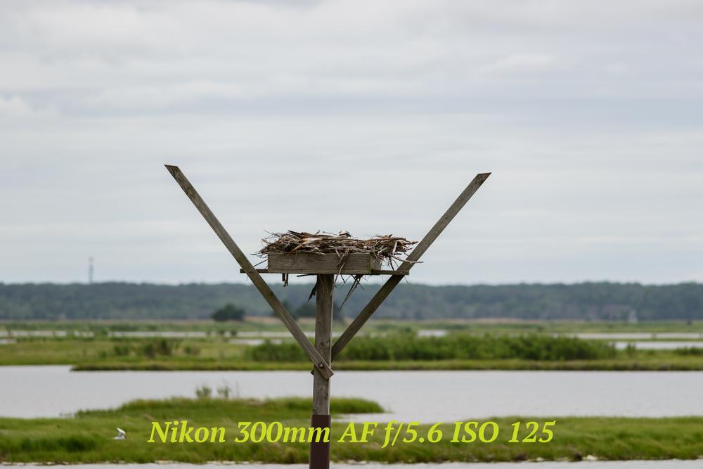 nikon300mm.jpg