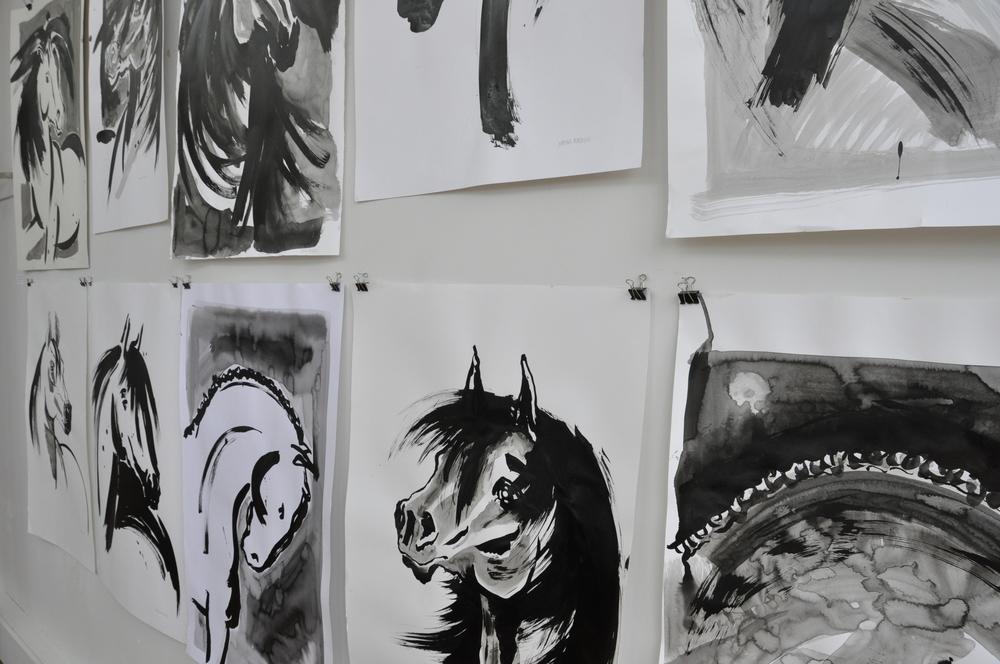 Horse studies 2013 / 14