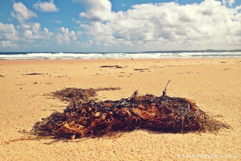 seaweedonbeach