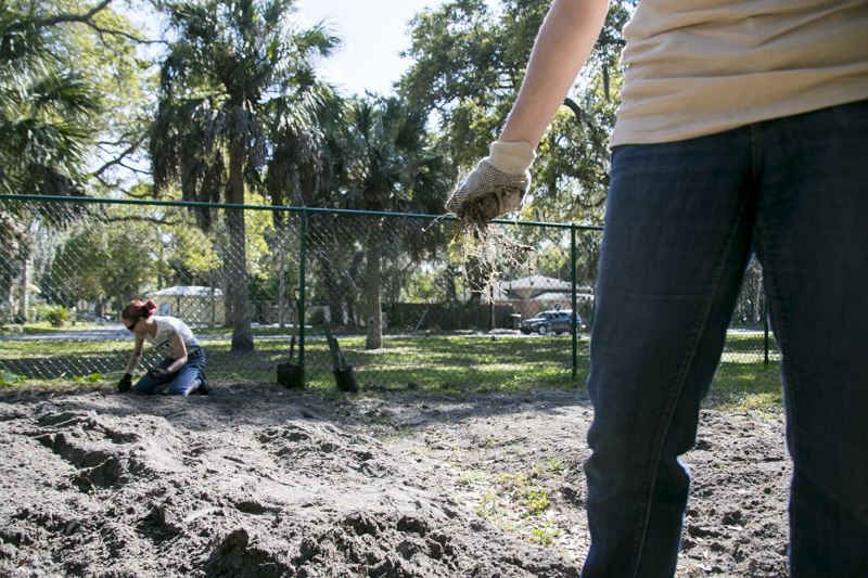 During the Ringling College  Alternative Spring Break  event students help make a new plot at the Orange Blossom Community Garden.  © Karen Arango