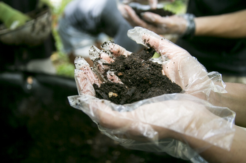 During the Ringling College  Cesar Chavez Day of Service  event a student holds worm castings, while harvesting them at the Orange Blossom Community Garden.  © Karen Arango