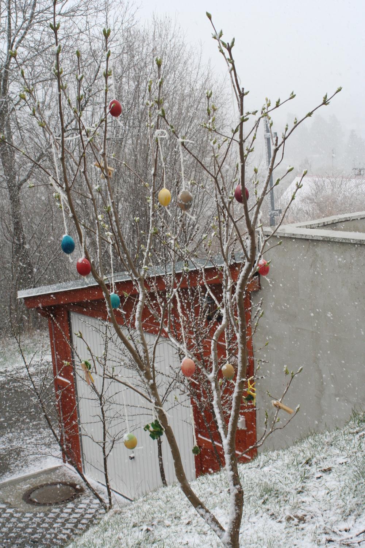 Our plum tree the year it snowed on Ostara