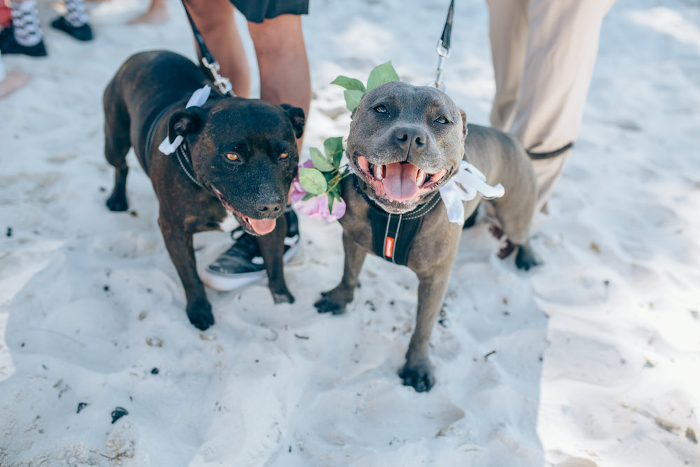 dogs at weddings Byron Bay celebrant 3.jpg
