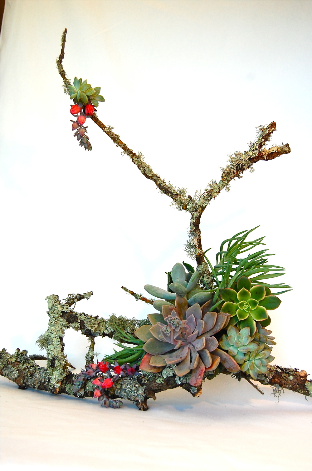 Medium Branch with Assorted Succulents