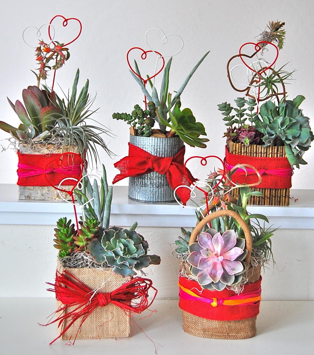 Small Valentine's Pots.jpg