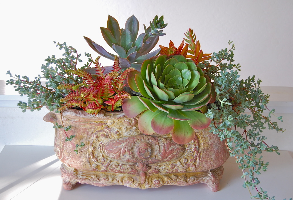 Designed Planting in Owners' Special Terra Cotta Planter