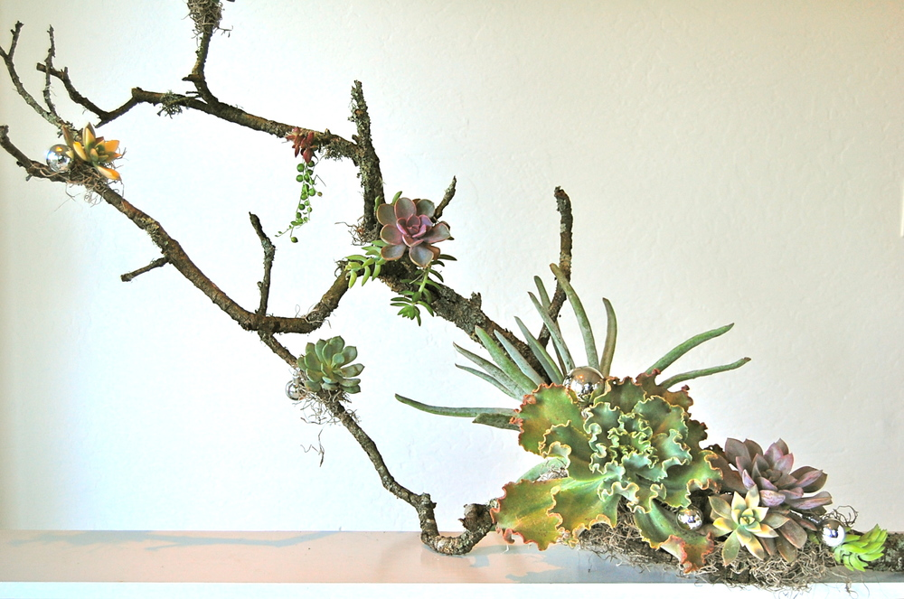 "LARGE BRANCH WITH ASSORTED SUCCULENTS 42""w x 24""h  (as shown)– various sizes starting at $170. (sizes vary)"