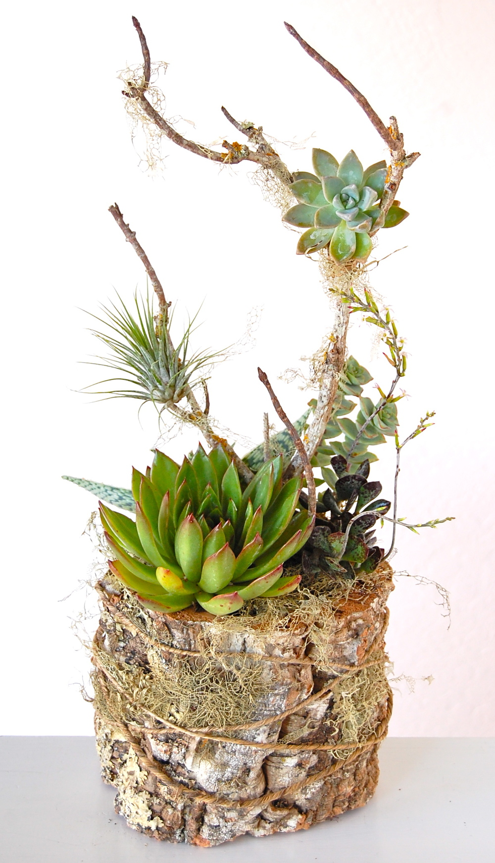 "VERTICAL CORK BARK CONTAINER 8""w x 21""h – $85."
