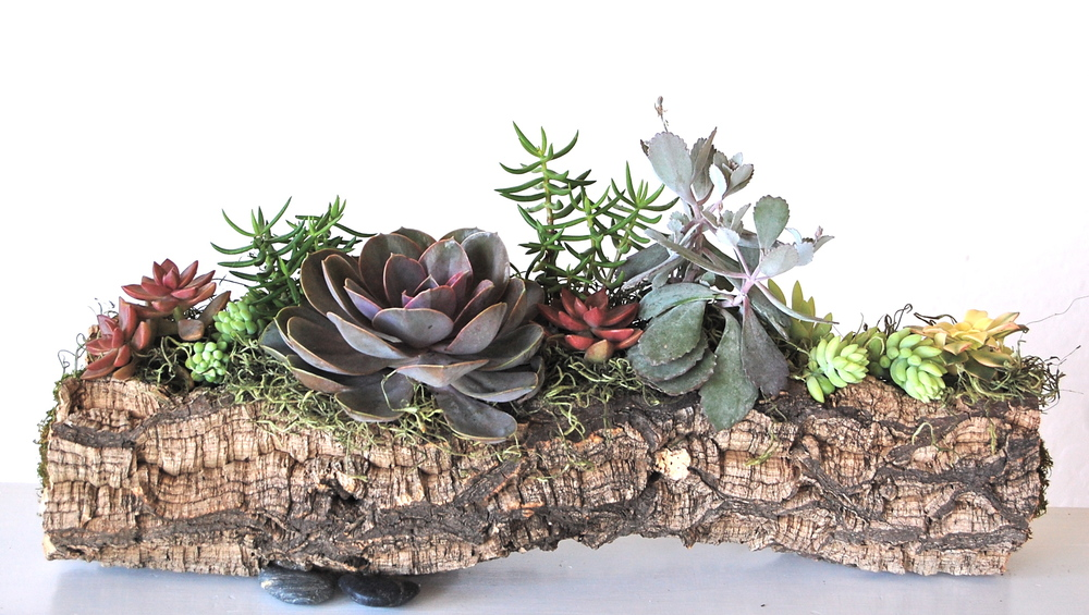 "PLANTED MEDIUM CORK BARK LOG     16""w x 8""h (as shown) $135.– various sizes available starting at $75."