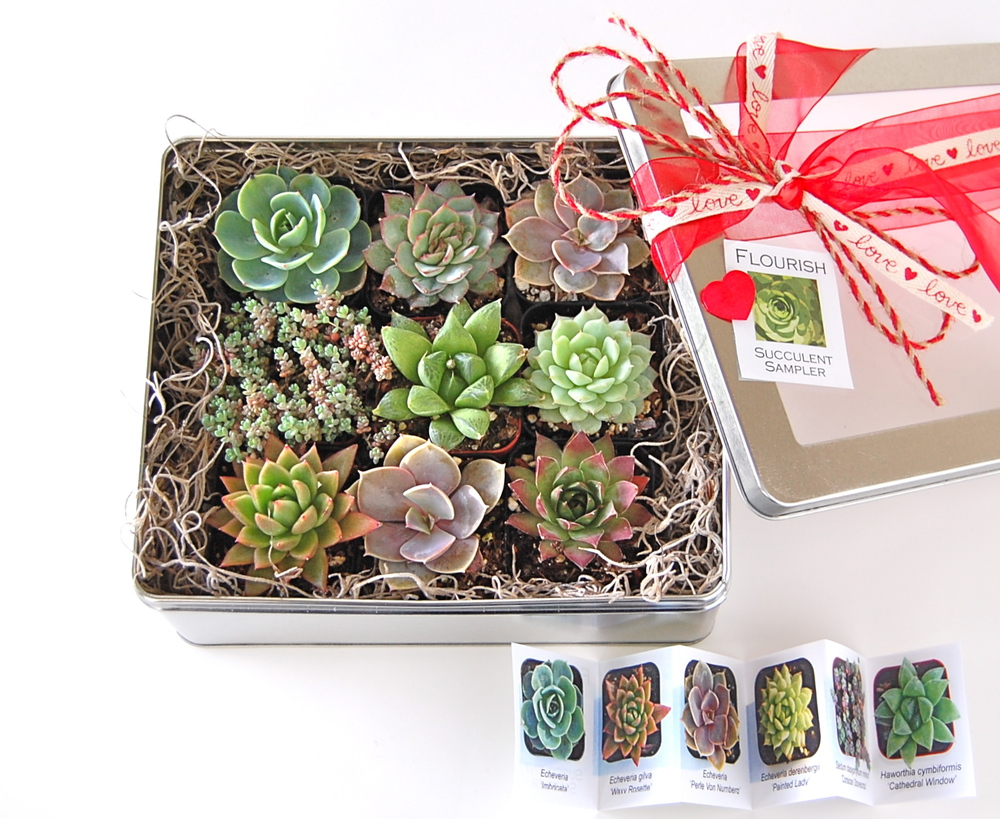 "VALENTINE SAMPLER TIN (nine young succulents ready for planting; succulent ID guide included) 8""w x 7""d x 3""h  – $40.     *** PLEASE NOTE THAT ANY FLOURISH ARRANGEMENT CAN BE CUSTOMIZED IN A VALENTINE THEME BY REQUEST."