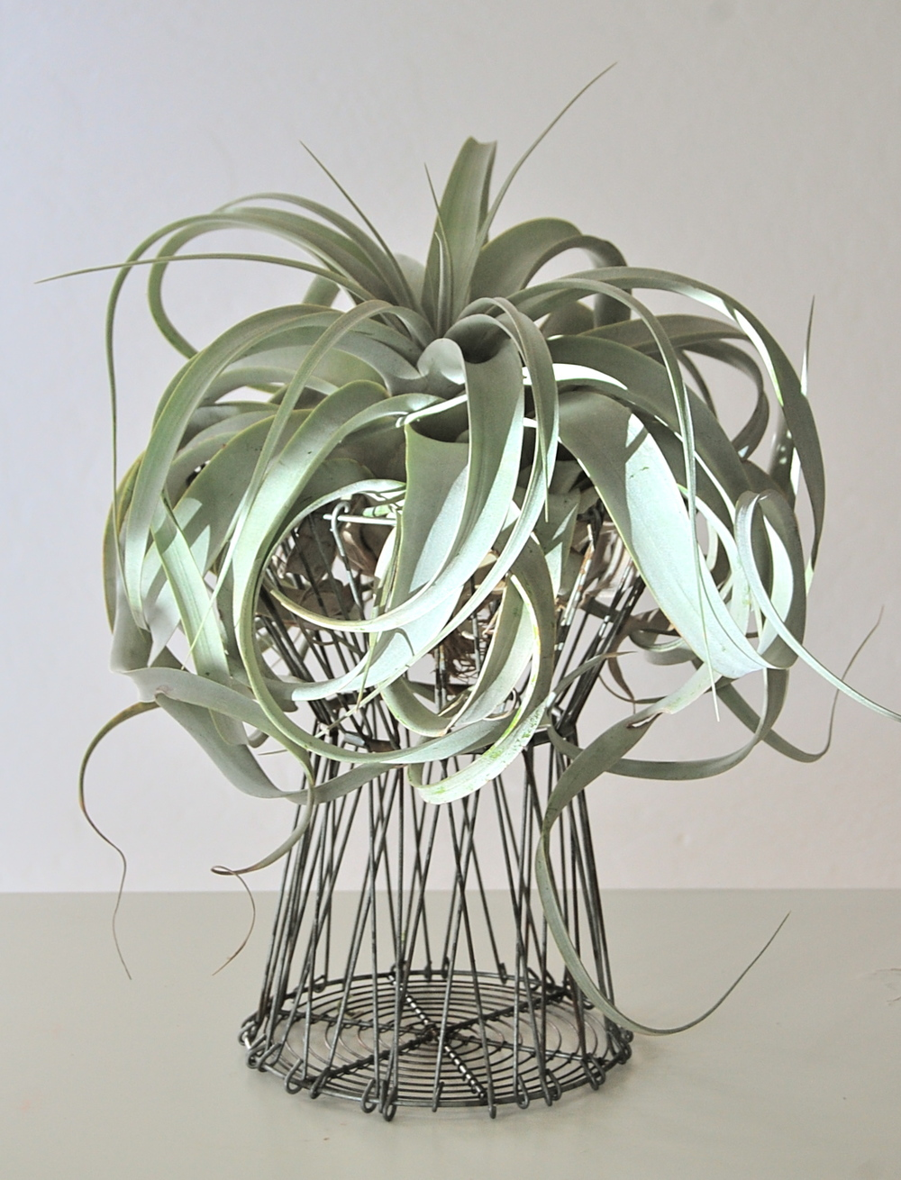 "FLEX-METAL BASKET WITH AIRPLANT 12""w x 16""h – $110."