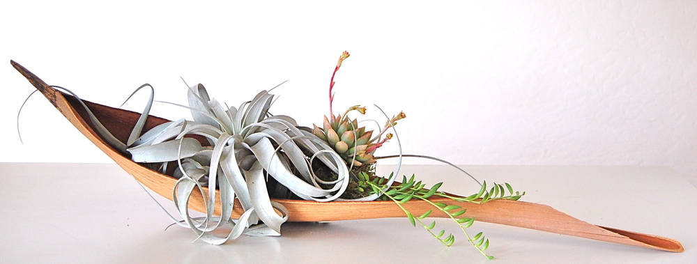 "PALM PADDLE WITH LARGE XEROGRAPHICA AIR PLANT & SMALL SUCCULENTS Approx. 30"" paddle– $115."