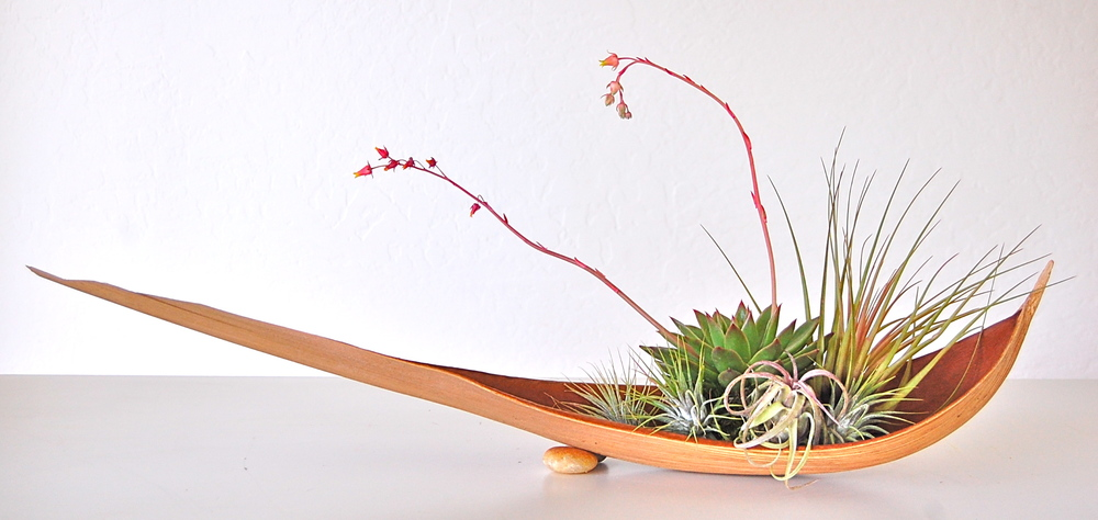 "PALM PADDLE WITH LARGE SUCCULENT & SMALL  AIR PLANTS Approx. 30"" paddle – $115."