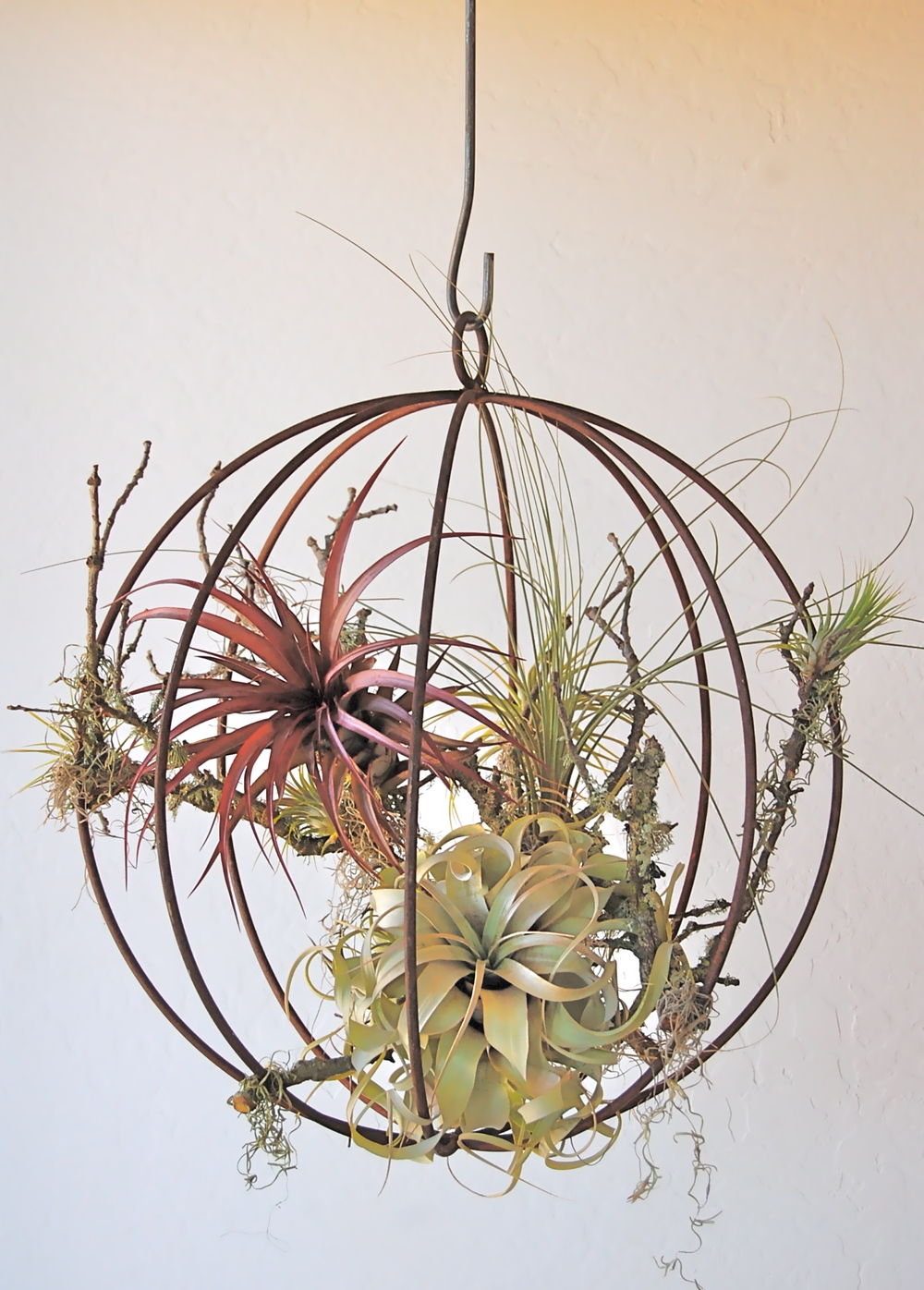 "HANGING METAL ORB WITH AIR PLANTS 19"" diameter– $215+ (smaller sizes available)"