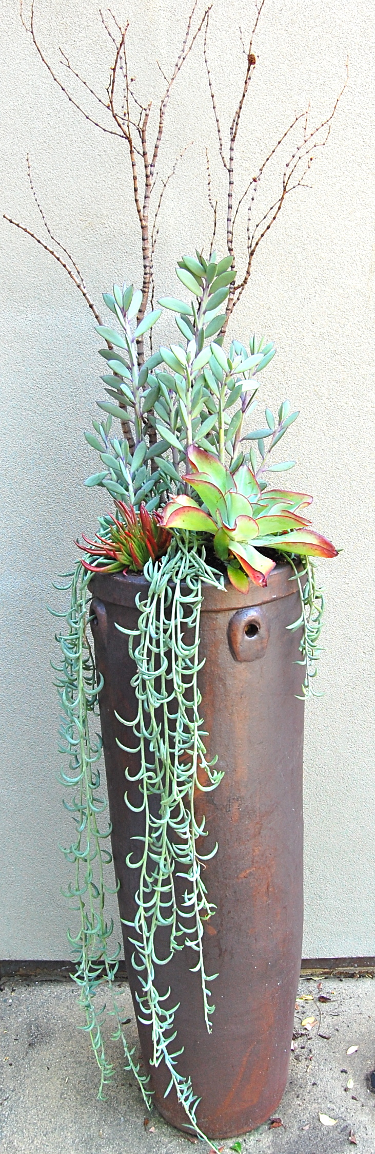 DESIGNED & PLANTED  CLIENT'S OUTDOOR VESSEL IN   LARKSPUR, CA