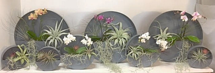 GROUPING OF CIRCULAR ZINC WALL HANGING GARDENS FOR FAMILY IN KENTFIELD, CA