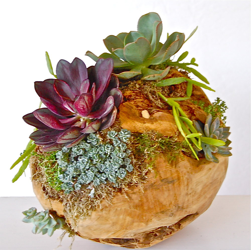 "PLANTED WOODEN ORB 12"" diameter –$195- $225."