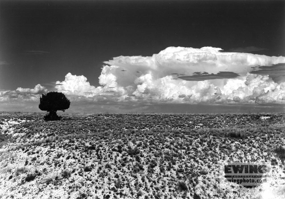 Rouke Rd. Comanche Grasslands, Colorado
