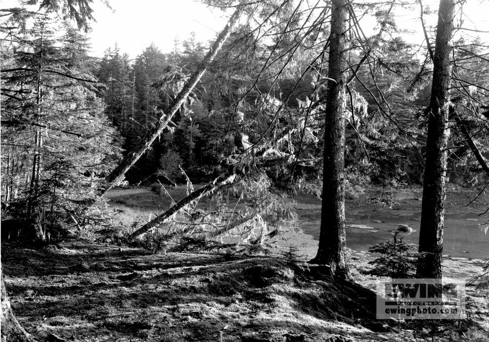 Doans Pt. Woods Sorrento, Maine