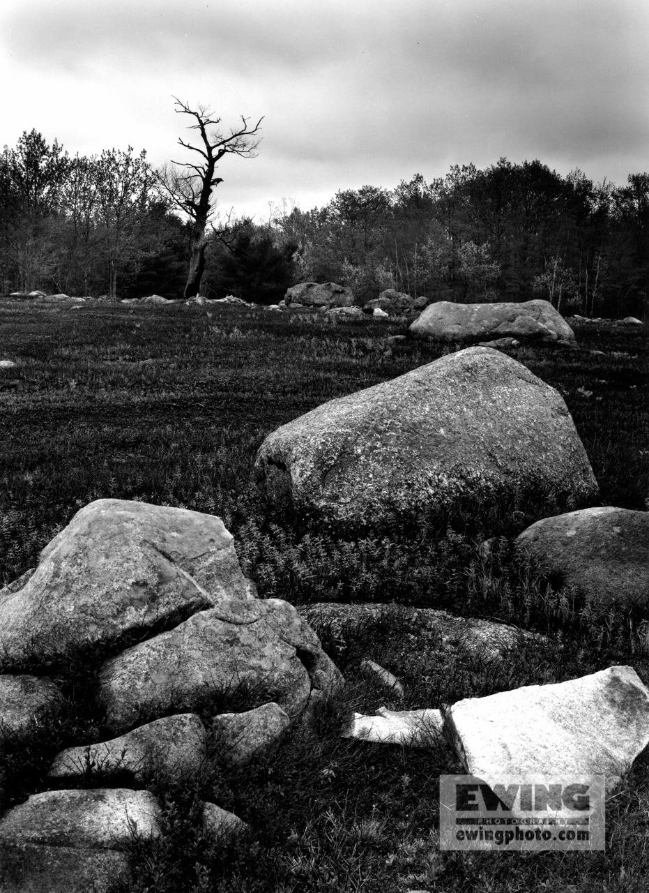 Blueberry Barrens Cherryfield, Maine