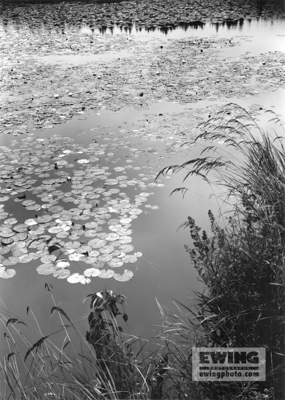 Ames Pond, Stonington Maine #147706