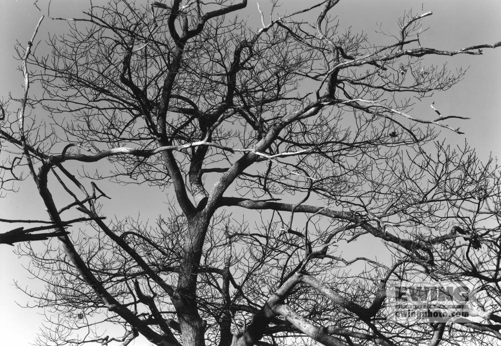 Little Johns Island, Oak Tree, Maine