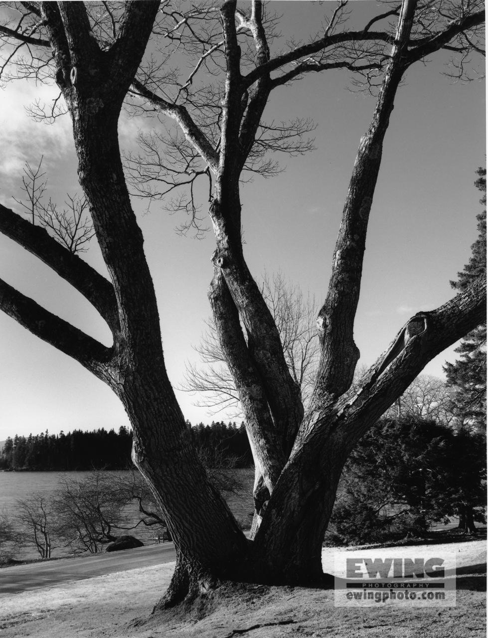 Oaks Oak Sorrento, Maine