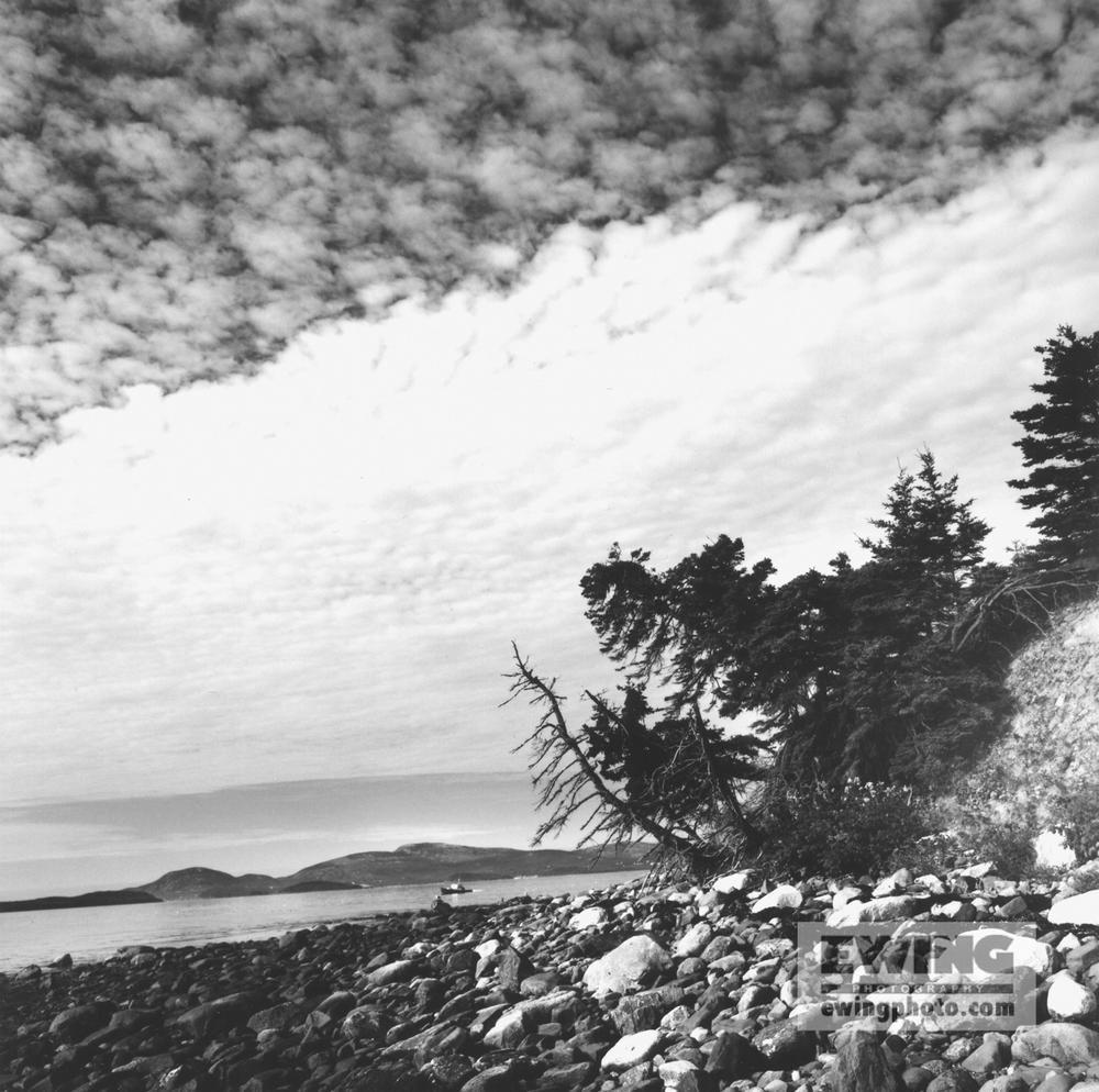 Little Calf Island Frenchman Bay, Maine B9 P100 #3-98