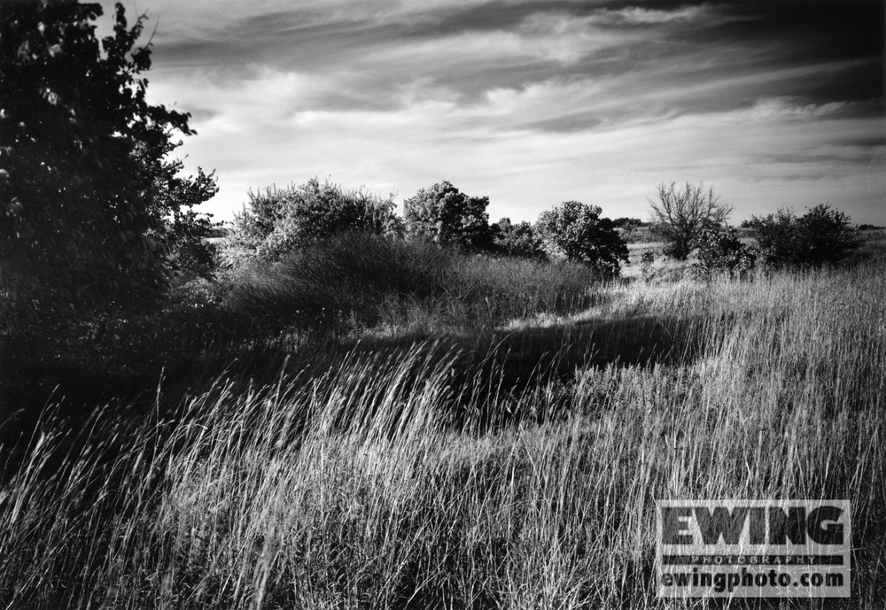 Grasslands at The Land Institute, Hagg Property, Salina, KS