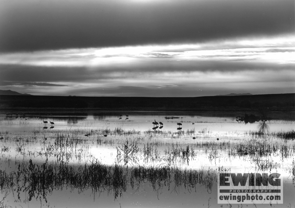 Bosque del Apache National Wildlife Refuge New Mexico