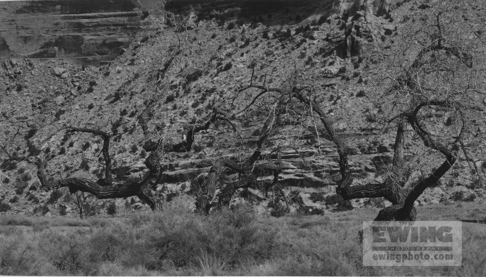 Buckhorn Wash San Rafael Swell, Utah