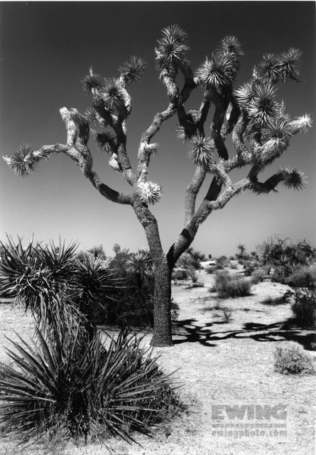 Joshua Tree, Single