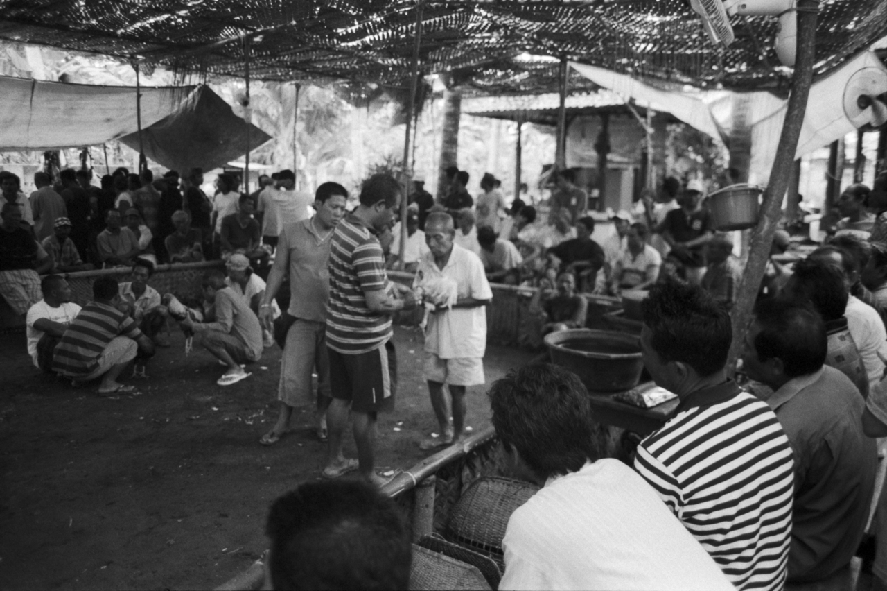 The Bi-Weekly Cock Touch. Nusa Lembongan, Indonesia. 2011.    Spectators watch as two locals get their cocks fired up before a fight.   From the series Body Over Mind.