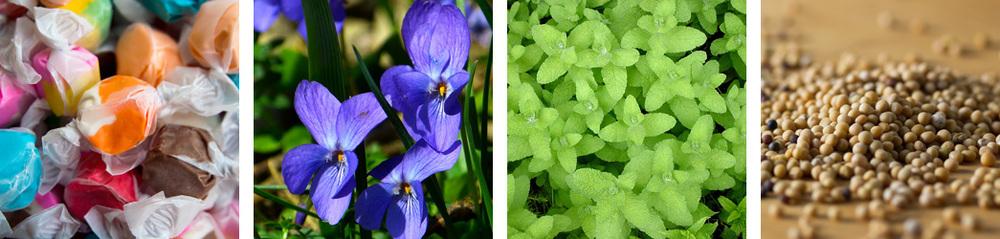 taffy / violet / applemint / mustard