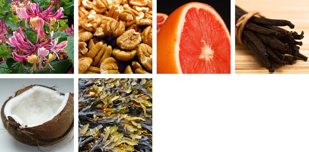 Honeysuckle / Pecan / Lemon / Peppercorn / Coconut / Seaweed