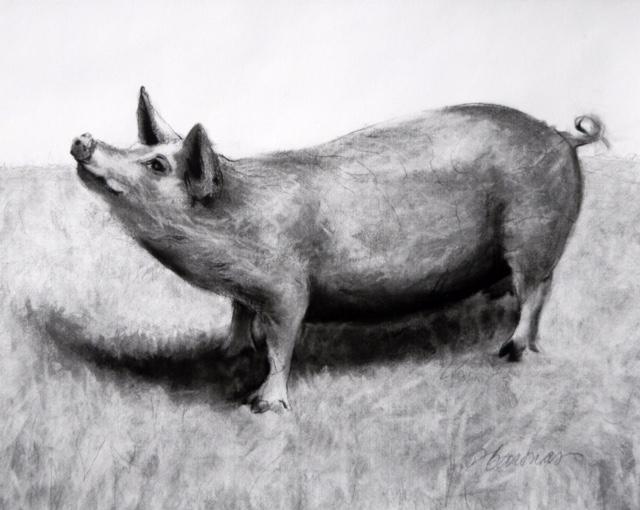 "Deborah Baronas, ""Pig with the Attitude,"" charcoal."