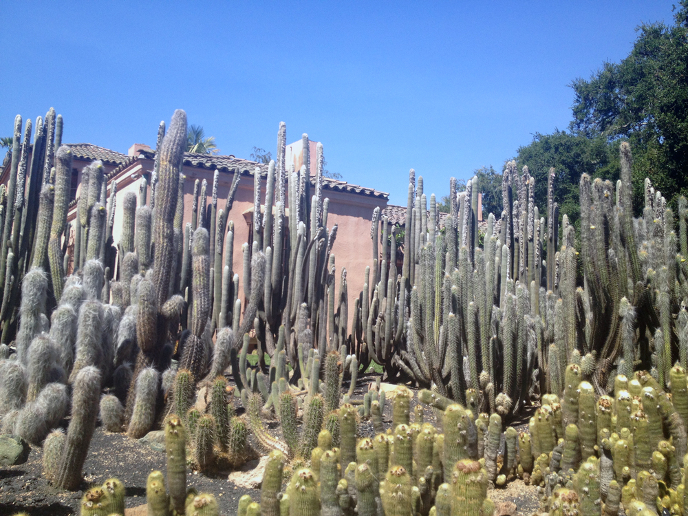 Lotus-land-cactus.jpg