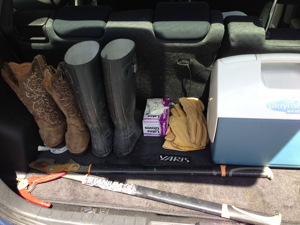 Berry picking kit, assembled at the ready in the trunk of my car from mid-June to August.