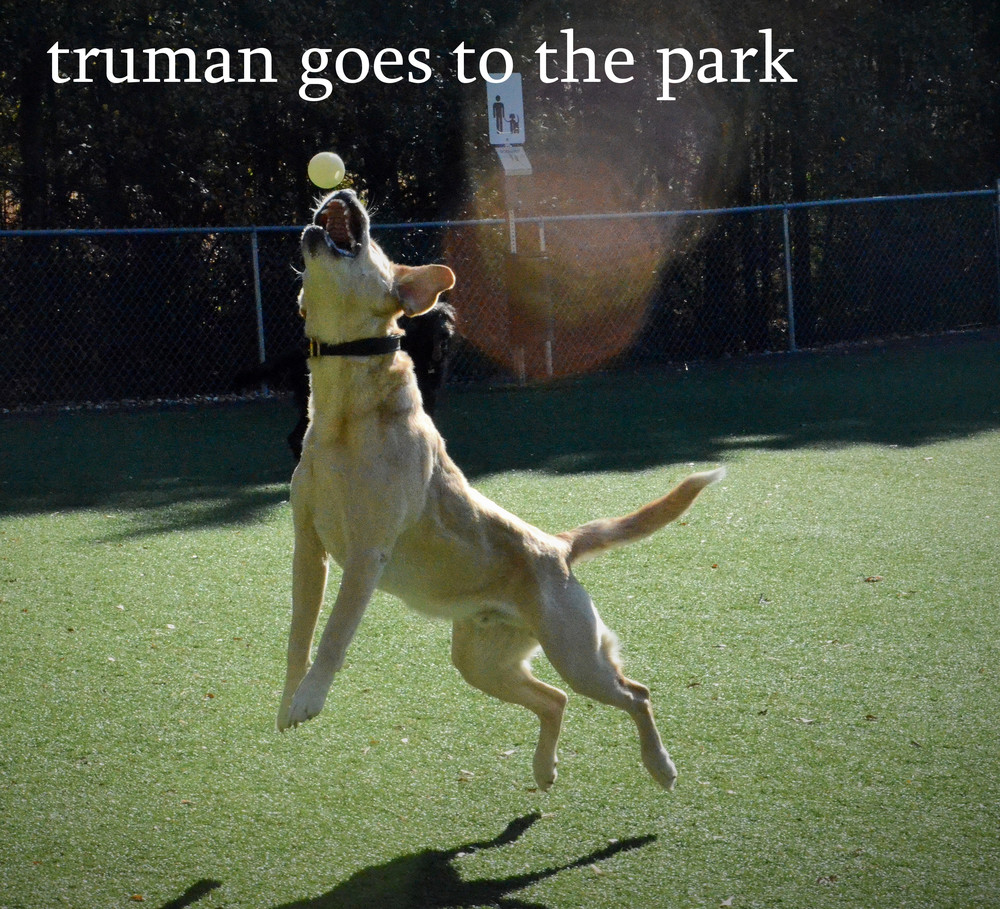 truman goes to the park