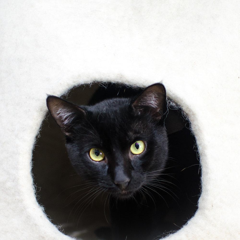 Crumbs & Whiskers Cat Cafe Los Angeles Santa Barbara Photographer Miranda Kelton Photography-4.jpg