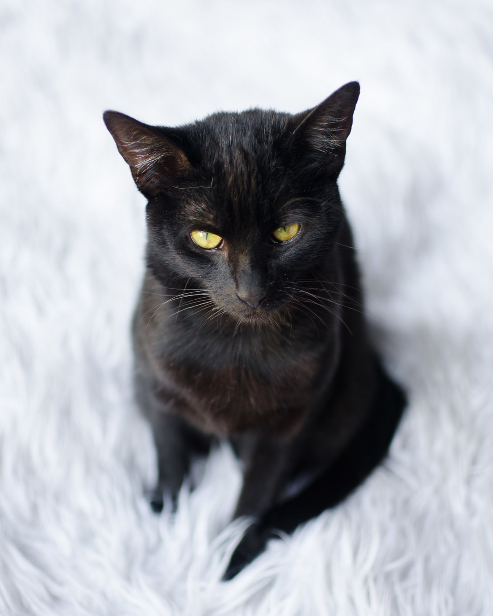 Crumbs & Whiskers Cat Cafe Los Angeles Santa Barbara Photographer Miranda Kelton Photography-1.jpg
