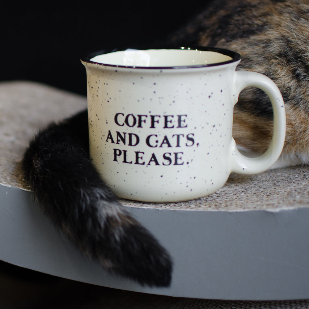 Crumbs & Whiskers Cat Cafe Melrose Los Angeles Miranda Kelton Photography