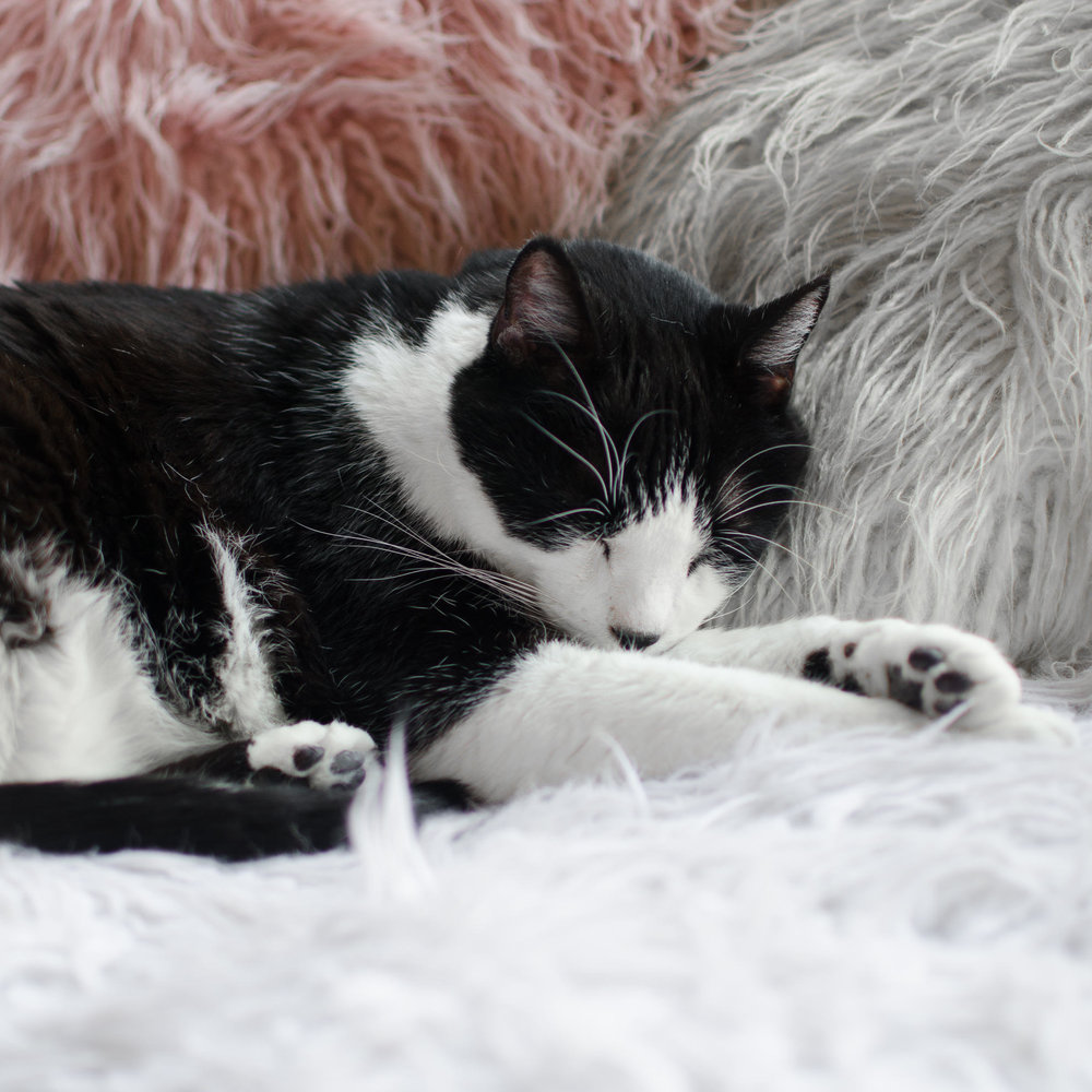 Crumbs & Whiskers Cat Cafe Los Angeles Santa Barbara Photographer Miranda Kelton Photography-11.jpg