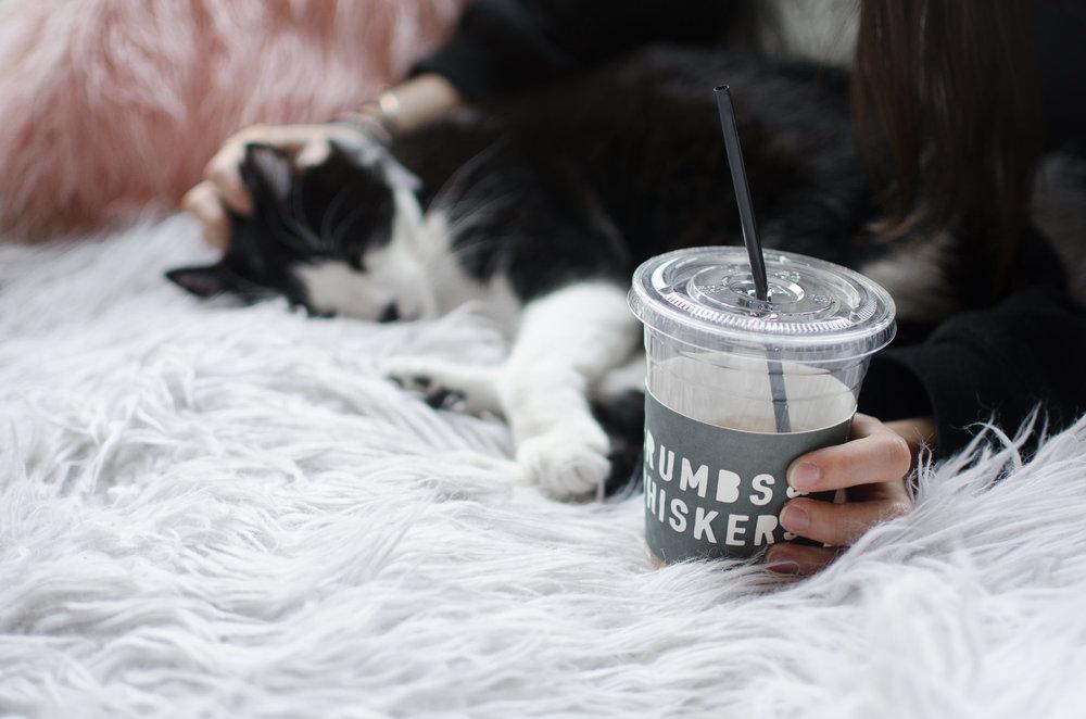 Crumbs & Whiskers Cat Cafe Los Angeles Santa Barbara Photographer Miranda Kelton Photography-9.jpg