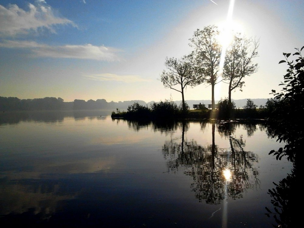 Rotterdam-at-sunrise-Kralingse-Plas-symmetry-tree.jpg